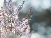 2020.03沖縄Ⅹ 夕方からソロお写んぽ - Green Floral