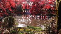 植物園に行く2020年12月 - 写楽彩