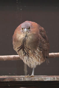 井の頭・水生物園の鳥たち~まんまるミゾゴイとソリハシセイタカシギ - 続々・動物園ありマス。