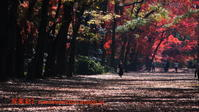 下鴨神社に行く12月(2020)-1 - 写楽彩2
