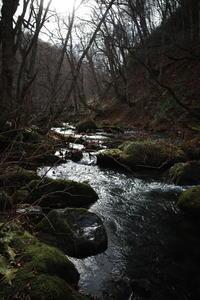 Go to トラベル in 青森県 その12 ~ 奥入瀬渓流 十和田湖 - 「趣味はウォーキングでは無い」