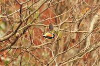 三郎の滝の野鳥たち - なんでもブログ2