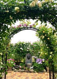つるバラの誘引剪定♡つるブルームーン&ギスレーヌドゥフェリゴンド♫ - 薪割りマコのバラの庭