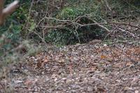 ■ヤマシギ20.12.10 - 舞岡公園の自然2