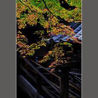 彩りが美しい - HIGEMASA's Moody Photo