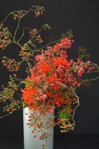 パリスタイルの風拡がる - お花に囲まれて