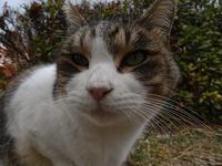 野良猫 - ネコと裏山日記