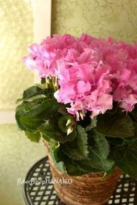 カバオくんに、物申す。② - きょう、花が咲いた。もしかすると、昨日かもしれないが僕にはわからない。