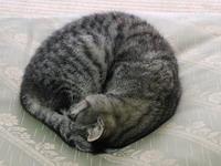 猫は漬け物石である。 - 飯沢康輔ブログ Art&Whisky