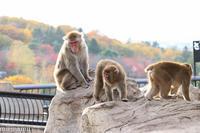 旭山動物園のおさるさん~10月の旭山動物園 - My favorite ~Diary 3~