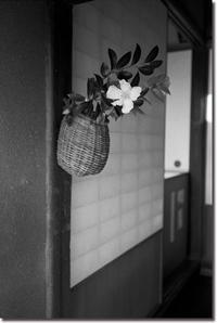 嵯峨野徘徊 - Hare's Photolog