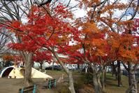 もみじ競演東金・中央公園 - 東金、折々の風景