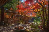 覚園寺の紅葉 - エーデルワイスPhoto