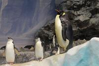 名古屋港水族館:南極の海~ペンギン水槽と世界唯一のナンキョクオキアミ(December 2019) - 続々・動物園ありマス。