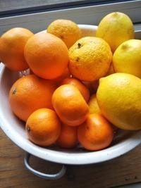 柑橘愛好会、会長の仕事ぶりを見て下さい(≧▽≦) - ちゃたゆき暮らし