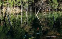 Forest Carp -  写道