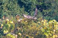 飛び出し - 趣味の野鳥撮影