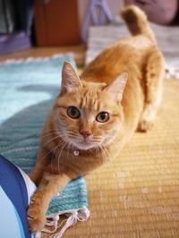 猫のお留守番 マリエちゃん編。 - ゆきねこ猫家族