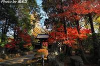 古刹・妙安寺の紅葉(2) - 四季彩の部屋Ⅱ