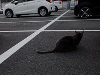 外猫 - 偶然の出逢いを求めて