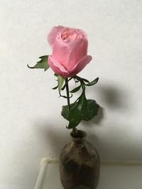 薔薇の思い出 - 赤城焼・陶器のねこと苔玉あそび.ハナイカダ探検隊