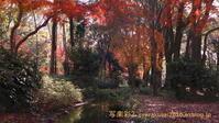 下鴨神社に行く12月(2020)-3 - 写楽彩2