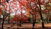 下鴨神社に行く12月(2020)-5 - 写楽彩2