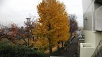 冬の花蘇芳 (はなずおう) - 台町公園ブログ