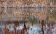 カモのいる池 - できる限り心をこめて・・Ⅳ