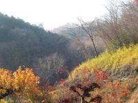 ペチカの恋しい季節 - くぬぎの森の物語/鵜澤 廣