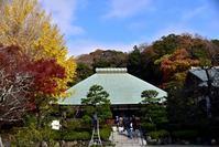 2020秋鎌倉紅葉さんぽ浄妙寺とウィウィのフレンチランチ - 明日はハレルヤ
