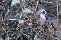 今日は某池に鳥見です 20201213 - 田舎のじーじのつぶやき