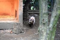 ヤブイヌ - 動物園へ行こう