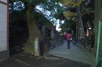 【富士講】富士塚を並べてみた【過去記事まとめ】写真ならまだまだあります - 揺りかごから酒場まで☆少額微動隊