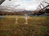 りんご・ぶどうの年内の作業は終盤へ - 信州ピース&ナチュラルだより