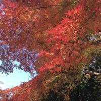 近所の紅葉スポット^_^v - ~おざなりholiday's^^v~ <フィルムカメラの写真のブログ>