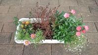 秋のボランティアプランターを解体 - ウィズコロナのうちの庭の備忘録~Green's Garden~