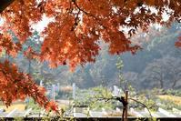 生田緑地ばら苑のボランティアへ - バラとハーブのある暮らし Salon de Roses