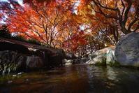 小さな渓谷の紅葉 - summicron