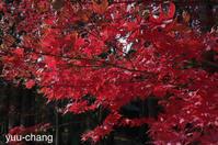 曹源寺最後の紅葉 - 下手糞でも楽しめりゃいいじゃんPHOTO BLOG
