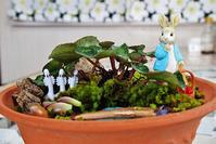 ピーターラビットの苔リウム - ♪一枚のphotograph♪
