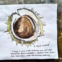 ドライグレンジのセイヨウトチノキパート7:トチの実 - ブルーベルの森-ブログ-英国のハンドメイド陶器と雑貨の通販