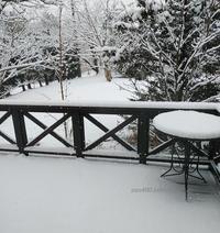 今朝の雪と猫の様子 - 標高480mの窓からⅡ