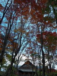 森のレストラン - 風の香に誘われて 風景のふぉと缶