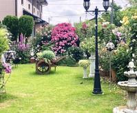 つるバラの誘引剪定♫アンジェラ♡と、私見ちゃったんです(笑) - 薪割りマコのバラの庭