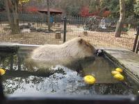 師走の高坂動物園ポタ2 - じてんしゃでグルメ!3