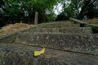 滴水の銀杏-色付き前 - Mark.M.Watanabeの熊本撮影紀行