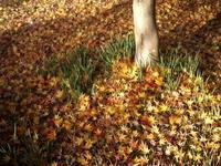 紅葉絨毯でのそれぞれの時間 - Baking Daily@TM5