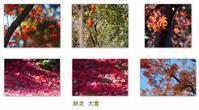 鱖魚群(さけのうおむらがる) - 花ありて 日々