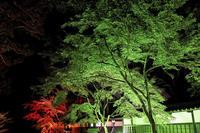 法多山のライトアップ - やきつべふぉと